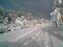 獣の足跡をたどって・・・-島根の雪.JPG