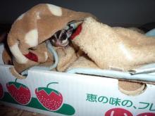 獣の足跡をたどって・・・-イチゴ箱