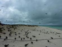 獣の足跡をたどって・・・-海鳥の島