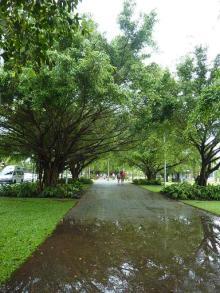 獣の足跡をたどって・・・-街路樹