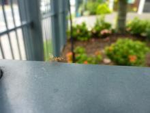 獣の足跡をたどって・・・-蟻