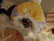 Dino & Lulu☆-ひなたママからプレ