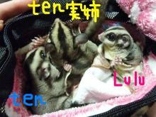 DinoLuluTenten☆-tentenと実姉とLulu