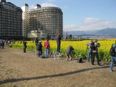 菜の花畑 002