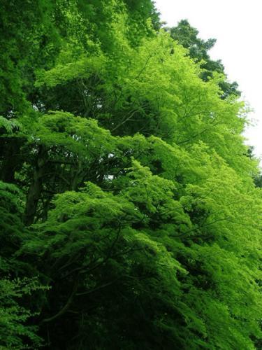 風そよぐ樹