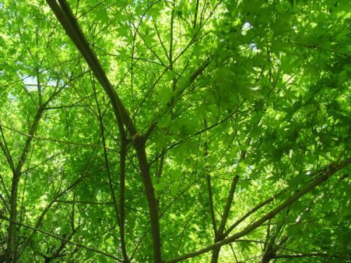 木々の癒し