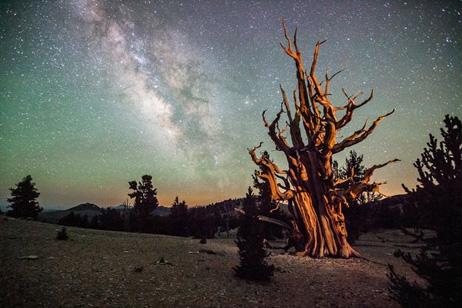 樹齢4000年の古木と天の川