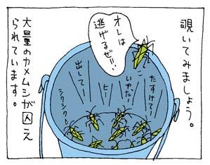 オオクモヘリカメムシ2