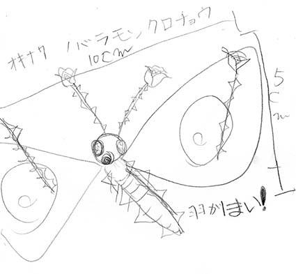オキナワノバラモンクロチョウ1