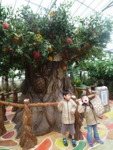 全てのフルーツがなる木