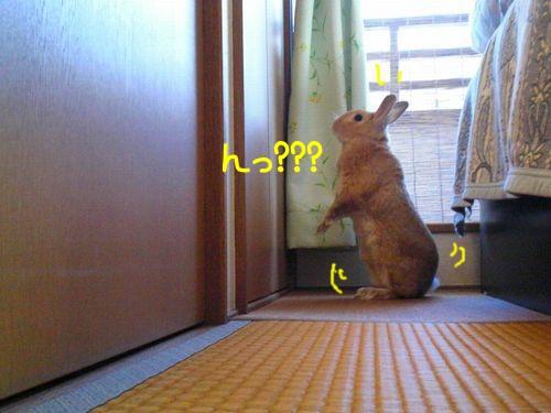 部屋んぽ5