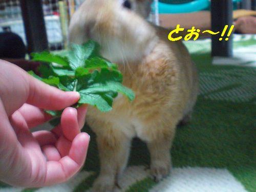 大根の葉2