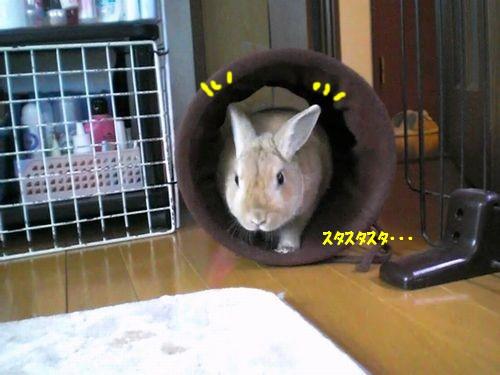トンネル遊び4