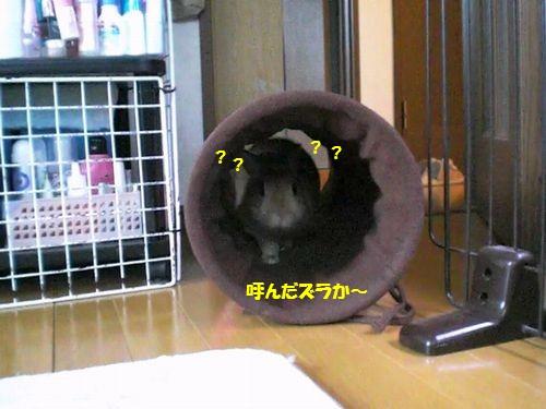 トンネル遊び1