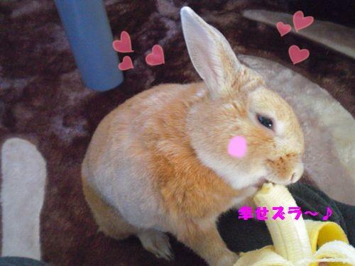 バナナ♪9