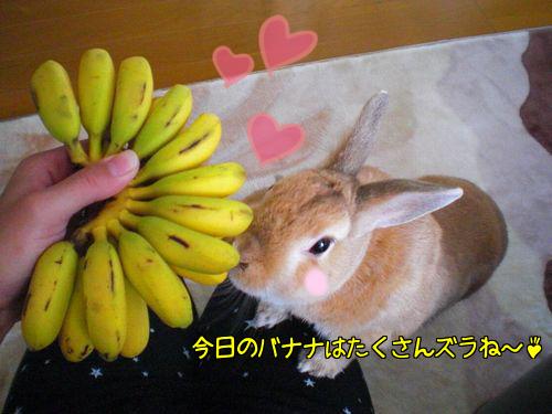 ミニバナナ1