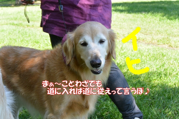 DSC_1070_201410260023357e6.jpg
