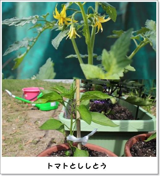 20130526yasai-3.jpg