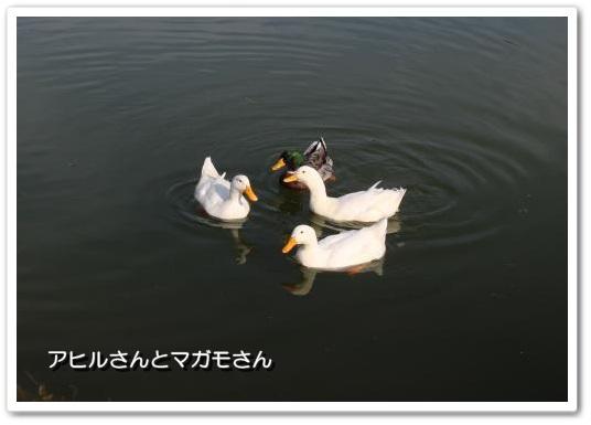 20140201-4.jpg