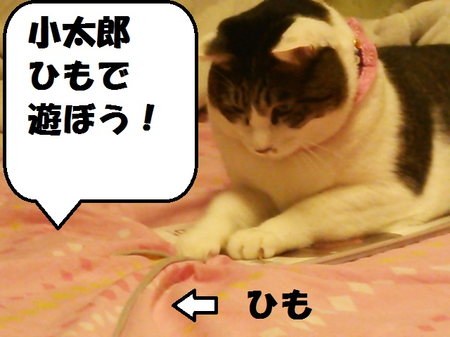 DSC_1019.jpg