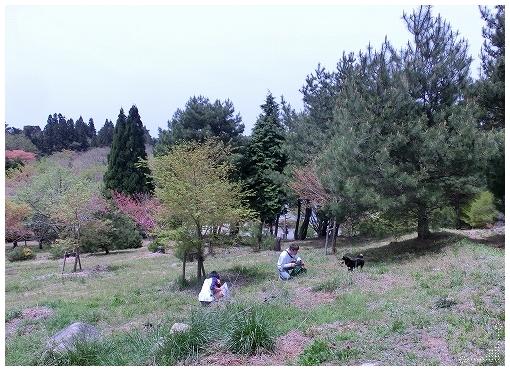 12.04.28 野呂山 007