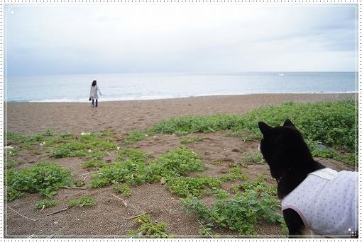12.05.02 和歌山 千里の浜 (1)