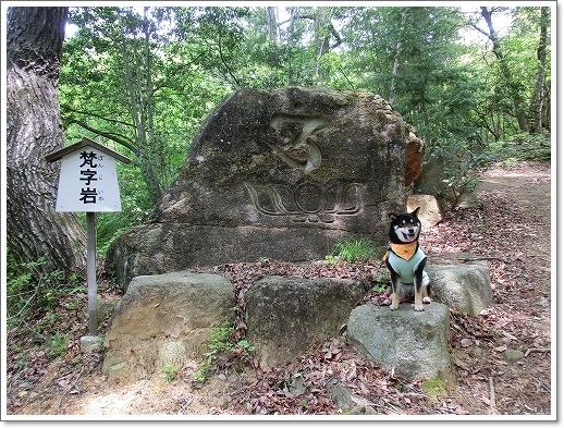 12.05.13 たかむら山 竹林寺 (6)