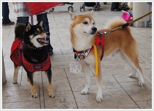 12.05.27 倉敷柴犬オフ会 059
