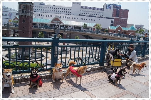12.05.27 倉敷柴犬オフ会 079