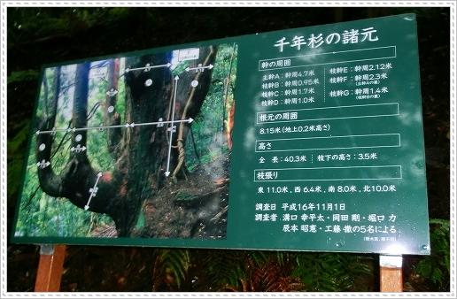 12.07.14 温井ダム&千年杉 (18)