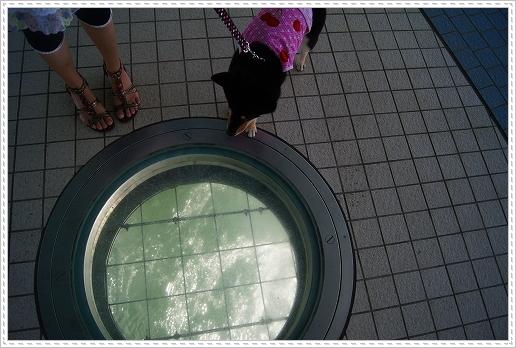 12.08.15 西海橋公園 (5)