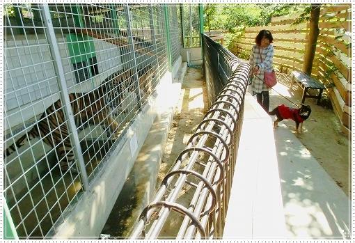 12.10.13 しろとり動物園 024