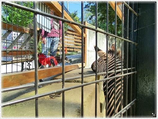 12.10.13 しろとり動物園 030