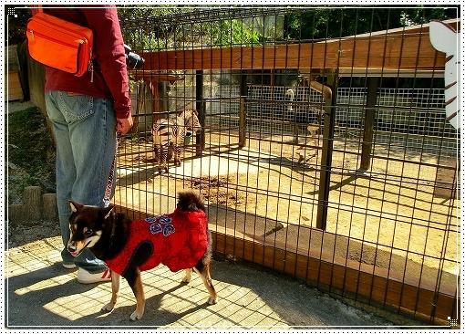 12.10.13 しろとり動物園 029