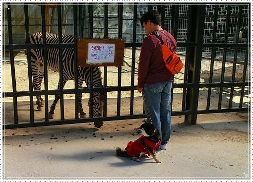 12.10.13 しろとり動物園 032