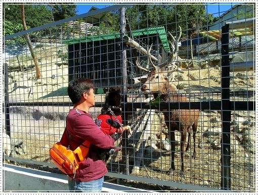 12.10.13 しろとり動物園 045