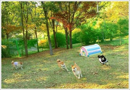12.10.20~21 らかん高原キャンプ 010