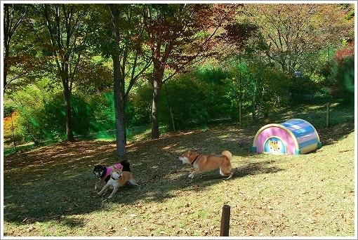 12.10.20~21 らかん高原キャンプ 081