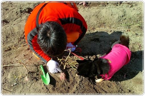 12.11.03 収穫祭 008