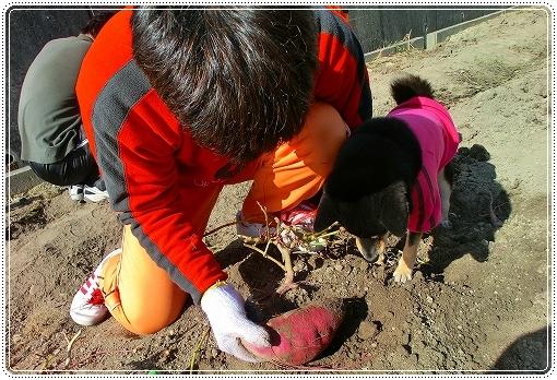 12.11.03 収穫祭 009