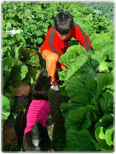 12.11.03 収穫祭 017