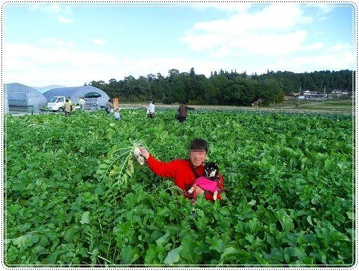 12.11.03 収穫祭 020