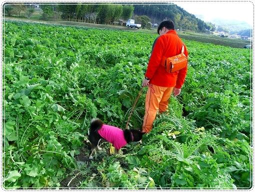 12.11.03 収穫祭 019