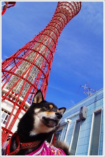 12.11.10 神戸港 20