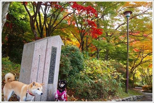 12.11.10 有馬・瑞宝寺公園 017