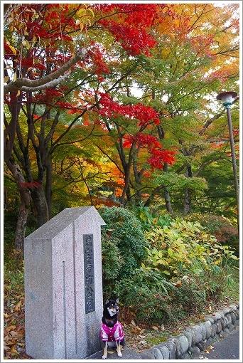 12.11.10 有馬・瑞宝寺公園 015