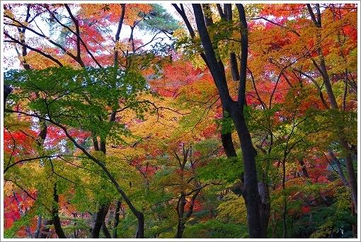 12.11.10 有馬・瑞宝寺公園 030