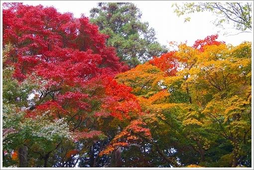 12.11.10 有馬・瑞宝寺公園 047