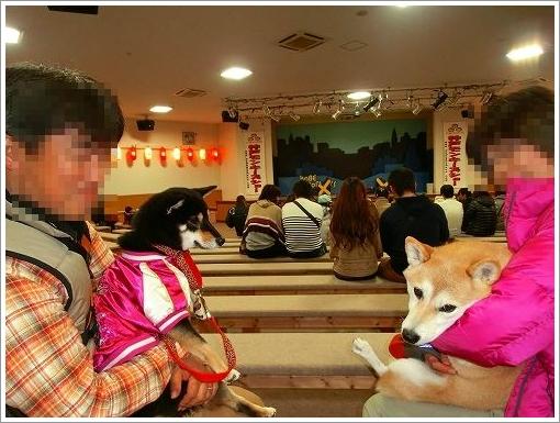 12.11.10 神戸イルミナージュ (19)