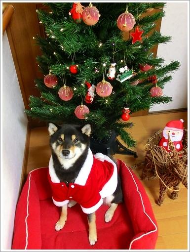 12.12.24 クリスマス 004
